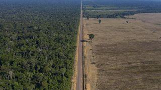 Ormansızlaştırma- Brezilya