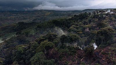 RDC : tollé autour de la levée du moratoire sur l'exploitation forestière