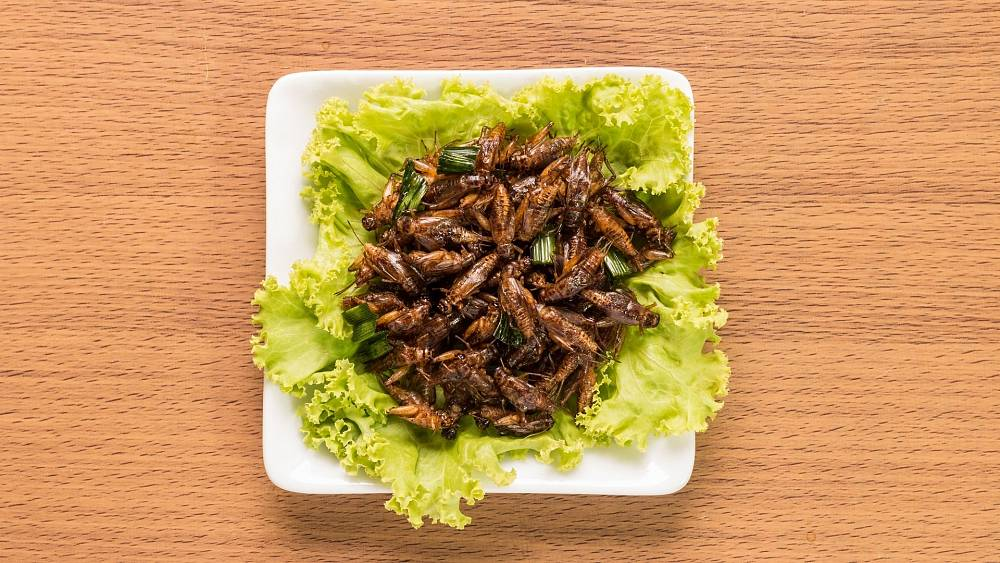 Cricket chips, bug burgers and beetle beer: What is the future of edible insects?