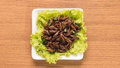 Fried crickets on a plate