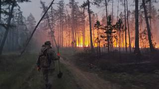 Les flammes ravagent les forêts en Sibérie