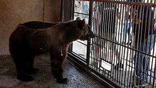 أحد الدبين داخل قفص في حديقة الحيوانات قرب مدينة صور الجنوبية، لبنان 18 يوليو 2021