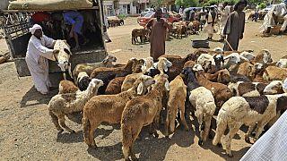 Sahel : l'insécurité menace le commerce de moutons