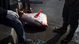 Parlak kral balığı, ay ışığı isimleriyle de anılan nadir görülen opah balığı.
