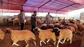 سوق للماشية في ضواحي العاصمة الليبية طرابلس