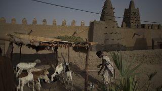 امرأة ترعى أغنام العائلة في منزلها المبني من الطوب في باماكو، مالي.