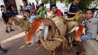 أطفال جزائريون في العاصمة في عيد الأضحى، الجزائر.