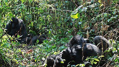 RDC : le parc de la Salonga n'est plus un patrimoine en péril