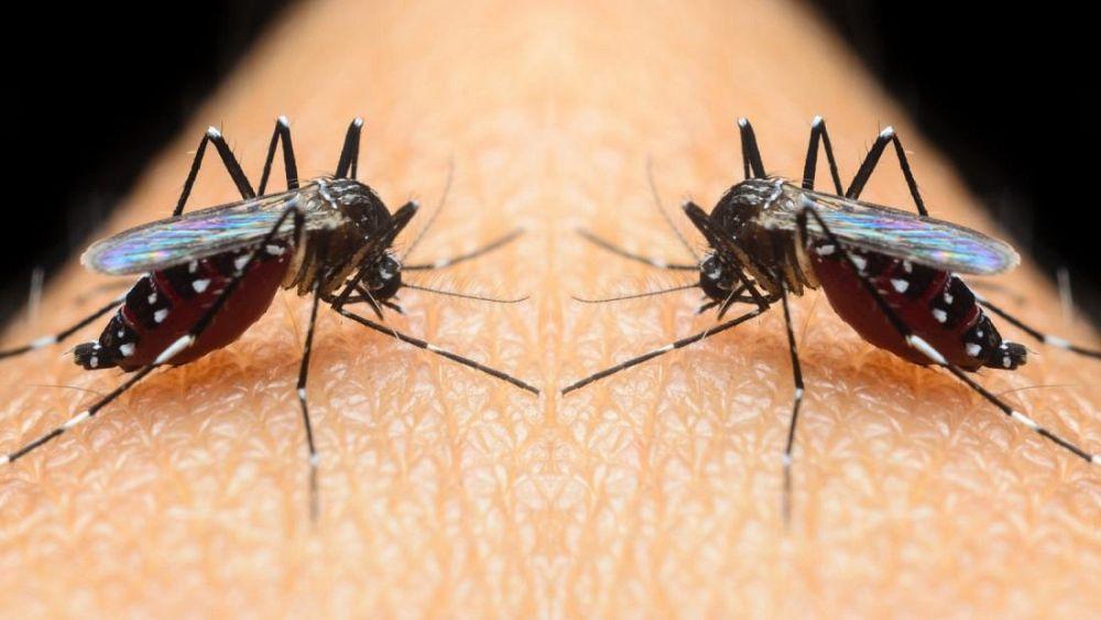 Agresif kaplan sivrisinekleri nerelerde etkin, korunma yolları neler?