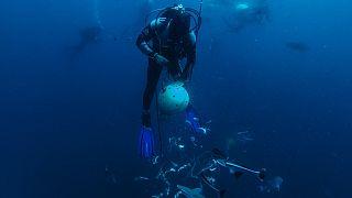 Afrique du Sud : la migration des sardines, un spectacle de la nature