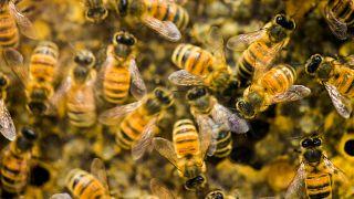 Forza e coraggio, api!