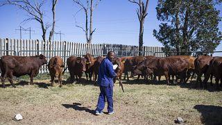 Afrique du Sud : les agriculteurs, victimes des émeutes