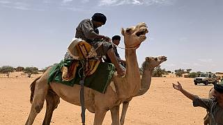 En Mauritanie, la police patrouille dans le désert à dos de dromadaire