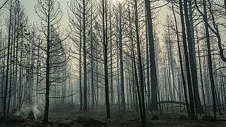 Des feux ponctuels couvent près des arbres endommagés par le Bootleg Fire, le jeudi 22 juillet 2021, à Paisley, Ore.