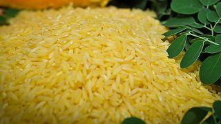 Filipinler'de üretilen altın pirinç türü, genetiği değiştirilmiş olduğu için bazı çevrelerce tepkiyle karşılanıyor.