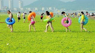 Çin'in Shandong eyaletine bağlı Qingdao'da deniz yosunu ile kaplı bir plajda yürüyen vatandaşlar
