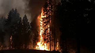 California's largest fire torches more homes