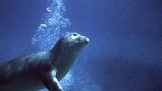 فقمة الراهب، جزيرة ألونيسوس اليونانية، 9 فبراير 2005