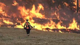 Waldbrände wüten in Spanien - Feuer in Katalonien außer Kontrolle