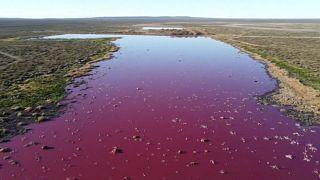 In Patagonia una laguna rosa shocking. Tutta colpa dell'inquinamento