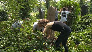 Des bénévoles nettoient le cimetière juif de la rue Kosma à Budapest