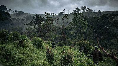 RDC : deux pygmées et six miliciens tués au parc de Kahozi-Biega