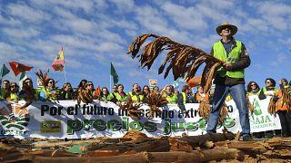 İspanya'da çiftçi protestosu (arşiv)