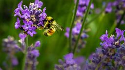 Weeds for the win: How to turn your garden into a haven for insects