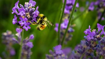 Increase native pollinating insect populations by planting wildflowers in your garden.