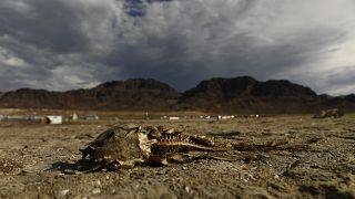 """يوم تجاوز موارد الأرض"""" يعود إلى مستوى 2019"""