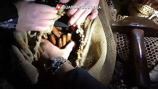 Criminal gangs are harvesting date mussels