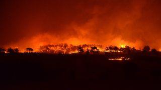 Manavgat'ta başlayan orman yangını