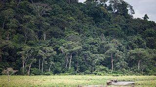Gabon's Ivindo park given World Heritage status by UNESCO