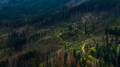 A scene of deforestation in Poland