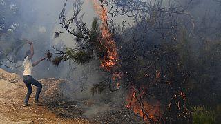 В Ливане горят кедры.