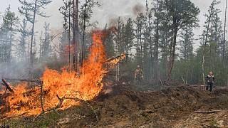 Sibirya'da orman yangınları