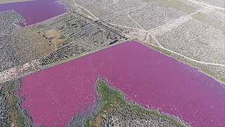 Lagune in Sürargentinien plötzlich pink verfärbt