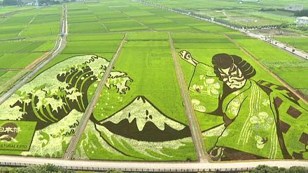 Japanese city transforms agricultural land into works of art