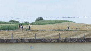 Migrantes junto a la frontera entre Serbia y Hungría