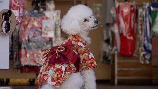 فروش لباس سنتی کیمونو برای حیوانات خانگی در توکیو