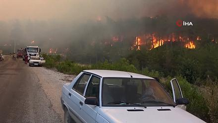 Forest workers killed in wildfires