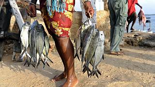End of era for Chinese fish as Kenya seeks to ban imports