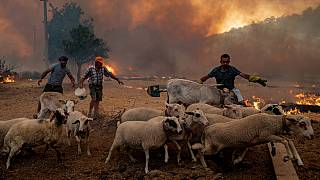 Locals scramble to flee or try and contain a forest fire at Cokertme on Turkey's southern coast