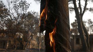 Πρωινές εικόνες από την πυρκαγιά στη Βαρυμπόμπη