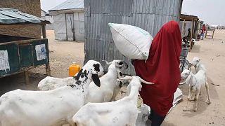 Au Nigéria, l'inflation impacte particulièrement les familles déplacées