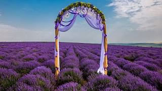 The lavender fields have become a popular spot for instagrammers