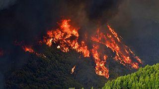 Φωτιές στην Ηλεία