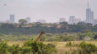The first ever National Wildlife Census in Kenya has begun
