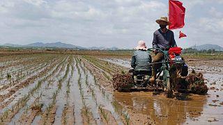 Kuzey Kore'de gıda kıtlığı sorunu yaşanıyor