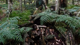 غابة شيروود في وسط إنكلترا